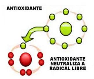antioxidantes-radicales-libres